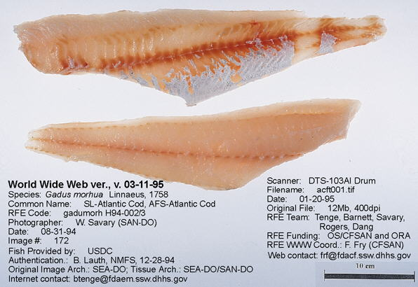 Haddock Vs Cod | Fish And Seafood Preparing Seafood Meals And Dishes Fish Cuts